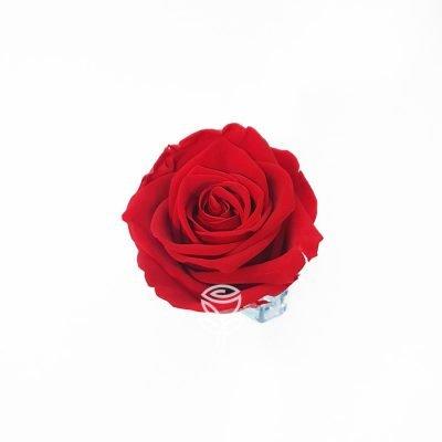 rosa preservada roja barcelona