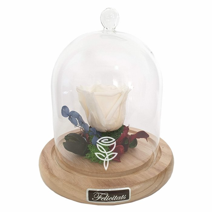 cupula rosa preservada blanca