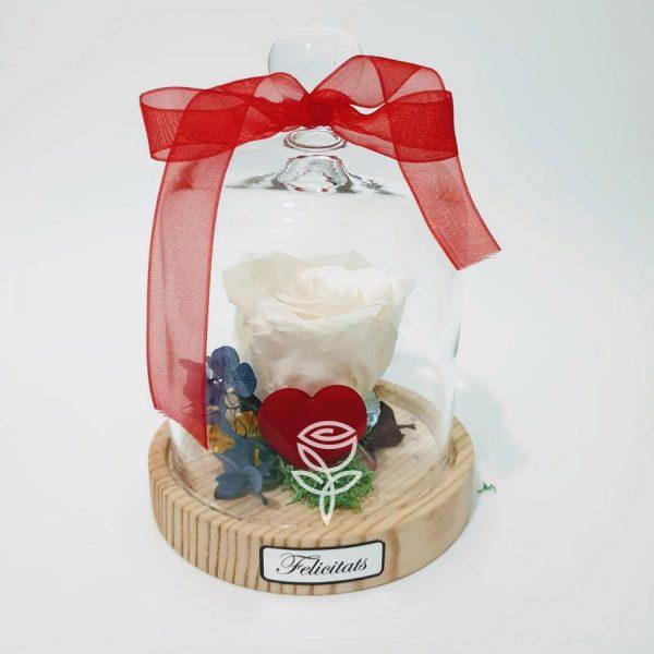 rosa preservada blanca campana