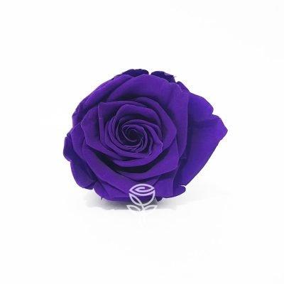 rosa preservada lila barcelona