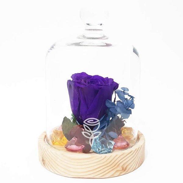 rosa preservada morada con campana barcelona