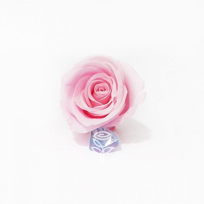 rosa preservada rosada barcelona