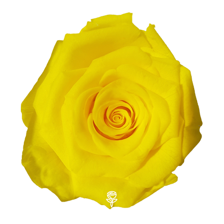 rosa preservada amarilla jdroses