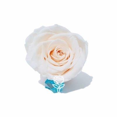 rosas preservada blanca barcelona