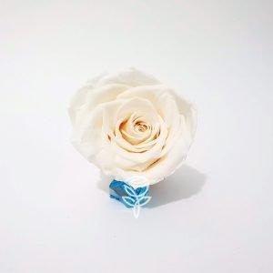 rosa preservada blanca barcelona