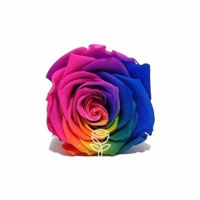 rosa preservada arcoiris barcelona