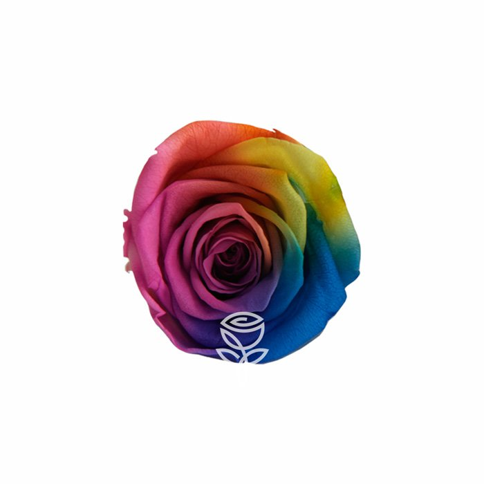 rosa eterna arcoiris barcelona