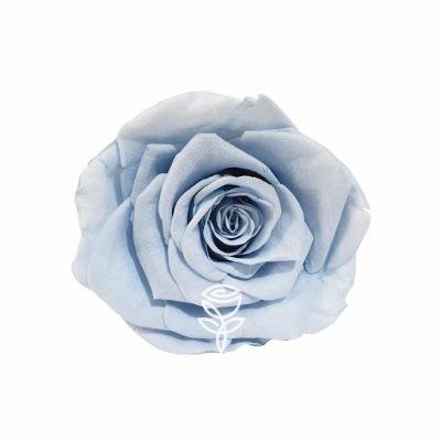 rosa preservada azul claro barcelona