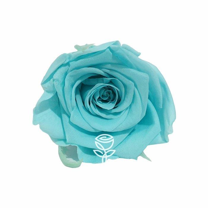 rosa preservada turquesa