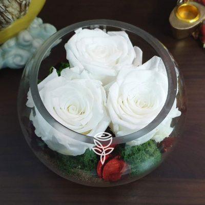 3 rosas preservadas blancas pecera