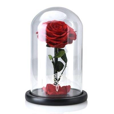 rosa preservada roja con tallo en campana de cristal
