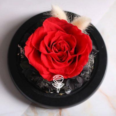 Rosa Preservada Roja decorada en Campana con luces