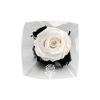 Rosa Preservada Blanca con Tallo LUX